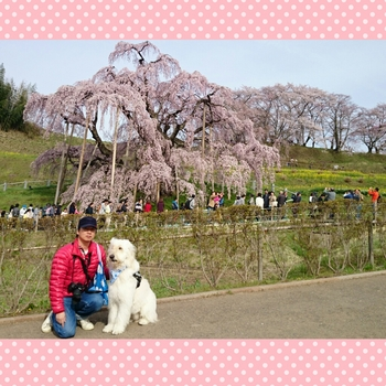 PhotoGrid_1460435745450.jpg