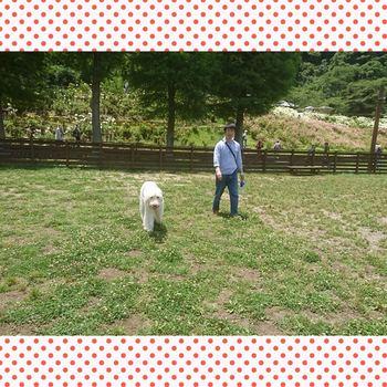 PhotoGrid_1498564536847.jpg